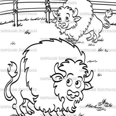Dessin parc animalier bison